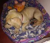 Se regala hermosa cachorrita de 3 meses