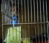 Hamster con su jaula