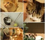 Gatos en adopción urgente
